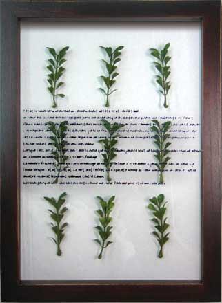 《ハーブフレーム》musee de herbe Herbe VI(ミュゼ ド エルブ ハーブ6)