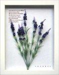 《ハーブフレーム》Herbe Frame Lavender1(ハーブフレーム ラベンダー1)
