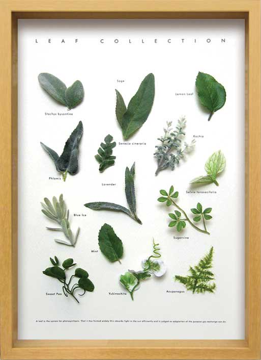 《ハーブフレーム》Leaf Collection Herbe 1(リーフ コレクション ハーブ1)