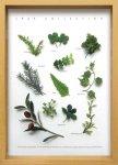 《ハーブフレーム》Leaf Collection Herbe 2(リーフ コレクション ハーブ2)