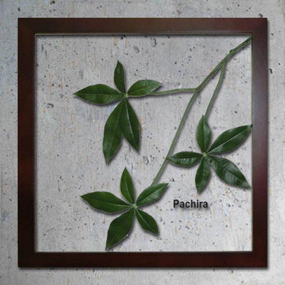 《リーフパネル》Forest Deco Pachira(パキラ)