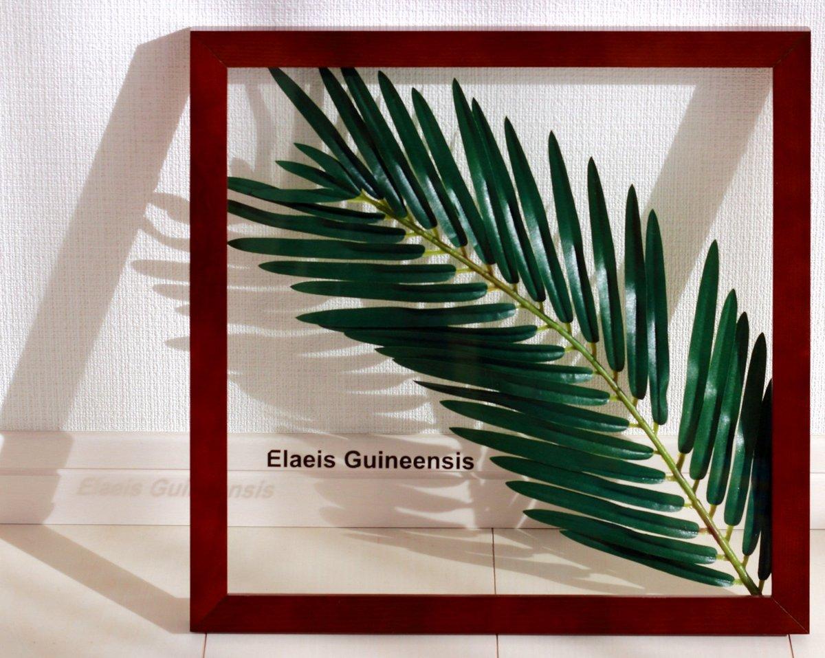 《リーフパネル》Forest Deco Elaeis Guineensis(ギニアアブラヤシ)