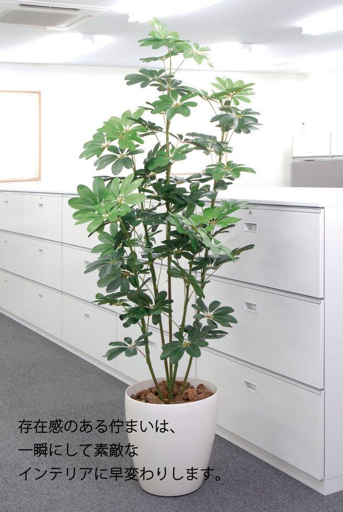 《光触媒観葉植物》カポック斑入り1.5〔フロアタイプ(ハイサイズ)〕