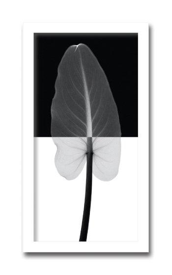 《レントゲン フォトフレーム》Steven N.Meyers  Calla Leaf I(カラーリーフ)