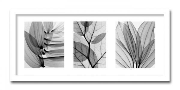 《レントゲン フォトフレーム》Steven N.Meyers  Leaf Collection(リーフ コレクション)