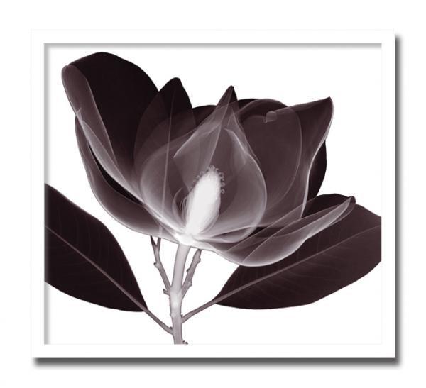 《レントゲン フォトフレーム》Steven N. Meyers Magnolia(マグノリア)
