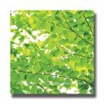 《アートフレーム》Green Leaves�(グリーンリーブス)