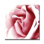 《アートフレーム》Color Rose(カラーローズ)