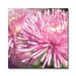 《アートフレーム》Chrysanthemum(クリサンセマム/キク)