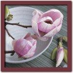 《アートフレーム》Catherine BEYLER Magnolias on a bowl(マグノリア オン ボウル/マグノリアとおわん)