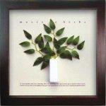 《ハーブフレーム》Musee de herbe Herbe 4(ミュゼ ド エルブ ハーブ)(ゆうパケット)