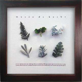 《ハーブフレーム》Musee de herbe Herbe 5(ミュゼ ド エルブ ハーブ)(ゆうパケット)