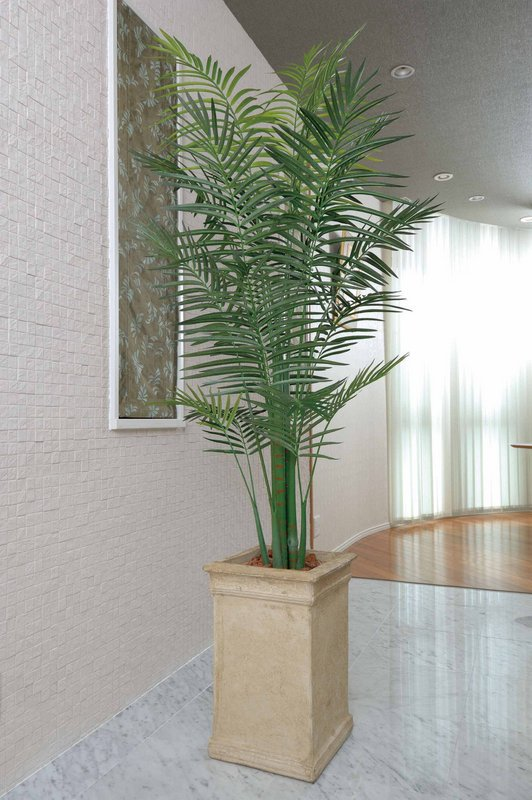 《光触媒観葉植物》セロ-ム2.0/光触媒〔フロアタイプ(ハイサイズ)〕