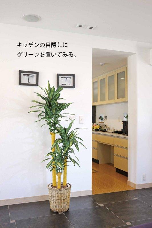 《光触媒観葉植物》ドラセナコンパクタ1.6/光触媒〔フロアタイプ(ハイサイズ)〕