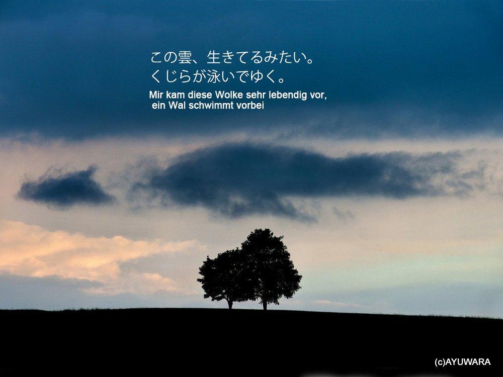 《アートフォトフレーム》巡り合い2(Encounter II  2013)〔ドイツ写真家/ガビー・ゾマー〕