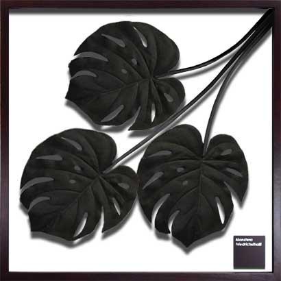 《リーフパネル》 モンステラ デリシオサ/ブラック