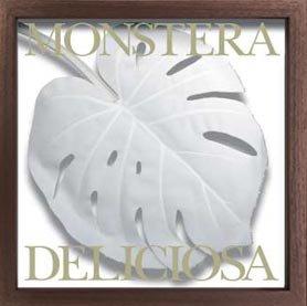 《リーフパネル》 モンステラ デリシオサ/ホワイト