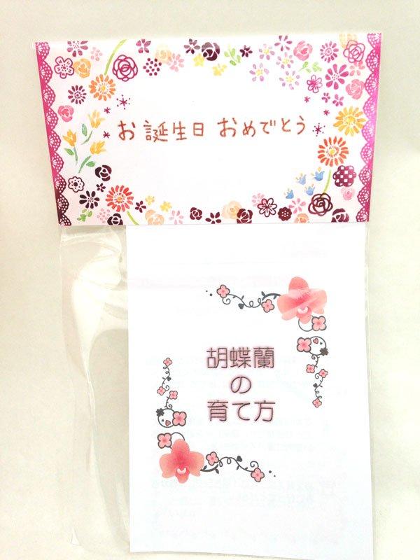《胡蝶蘭》誕生日お祝いセット(ギフト包装・メッセージカード付き)チュンリー 2本立ち 翌営業日出荷可能