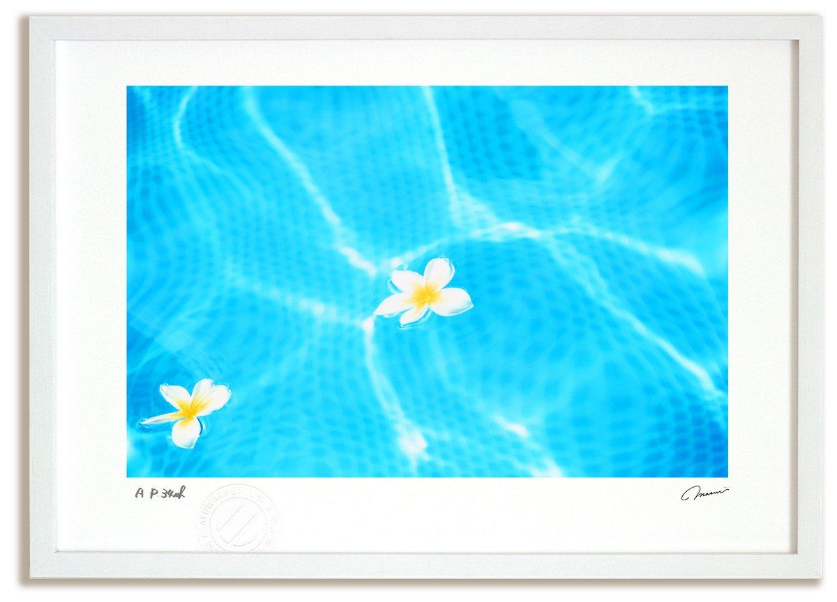 《アートフォト》波間に浮かぶ白花(撮影地:ハワイ)(レンタル対象)