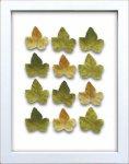 《リーフフレーム》リーフフレーム Grape Leaf グレープ リーフ