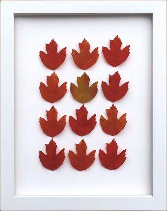 《リーフフレーム》リーフフレーム Maple Leaf メープル リーフ