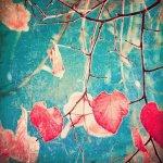 《アートパネル》Andrekart Photography  秋のピンクのハートと青い空