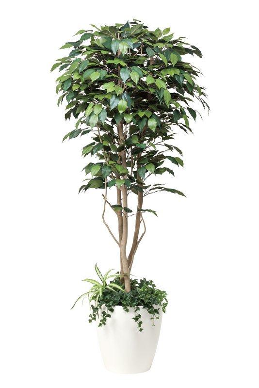 《光触媒観葉植物》フィカスベンジャミン1.8植栽付〔フロアタイプ(ハイサイズ)〕人気作品