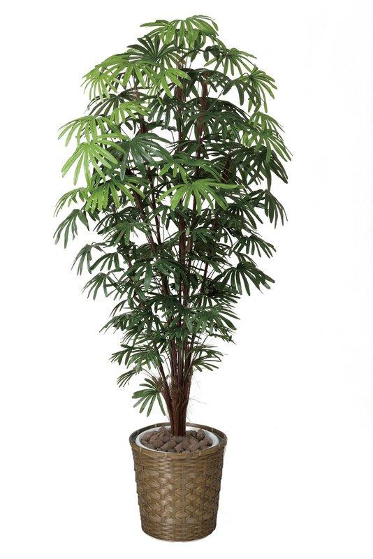 《光触媒観葉植物》シュロチク1.8〔フロアタイプ(ハイサイズ)〕