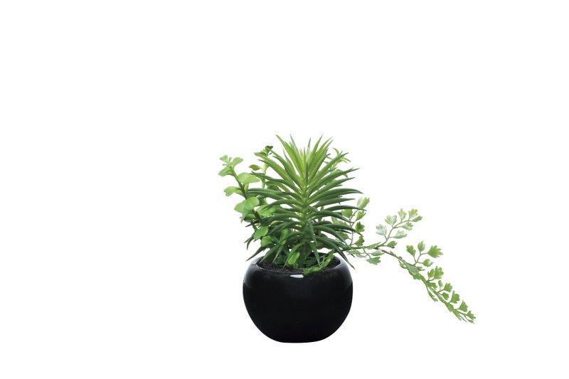 《光触媒観葉植物》ミックスインポット〔テーブルタイプ〕