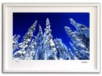 《ジクレー版画》アラスカの針葉樹001 アラスカ〔オーロラ風景写真家/堀田東〕