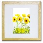 《ジクレー版画》Yellow Daisies (イエローガーベラ)〔竹内陽子〕/リビングを華やかに彩るインテリア。絵画のようなフラワーフォト