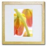 《ジクレー版画》Tulips(チューリップ)〔竹内陽子〕/リビングを華やかに彩るインテリア。絵画のようなフラワーフォト