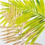 《壁飾り》ウッド スカルプチャー アートパームリーフ(ホワイト&グリーン)