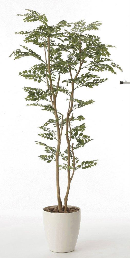 《光触媒観葉植物》トネリコ1.6〔フロアタイプ(ハイサイズ)〕