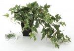《光触媒観葉植物》メイプルアイビー〔テーブルタイプ〕
