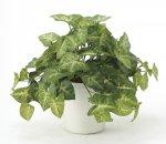 《光触媒観葉植物》フレッシュカラ−ジュ−ム〔テーブルタイプ〕