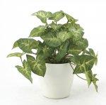 《光触媒観葉植物》フレッシュカラ−ジュ−ムS〔テーブルタイプ〕