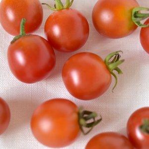 6/25(金)発送分_森田さんのミニトマト100g(自家採種・自然栽培)