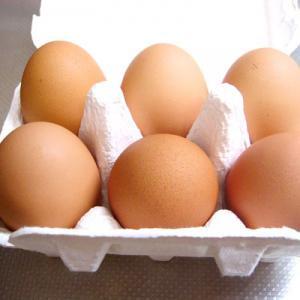 やまあい村の平飼い鶏有精卵 6ケ入り(熊本県産)