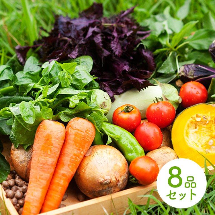 自然派きくち村オリジナル野菜8品セット (農薬・化学肥料不使用) 4/7(火)発送分