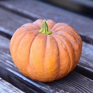 ひろふみ農園の小菊かぼちゃ 1玉(無農薬・無化学肥料栽培、自家採種)