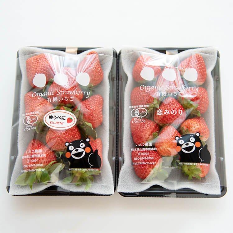 3/12(金)発送分:伊藤農園のイチゴ2パック(恋みのり250g:2パック)有機JAS