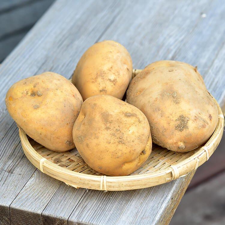 徳用♪森田さんのジャガイモ(自然栽培)1.2kg