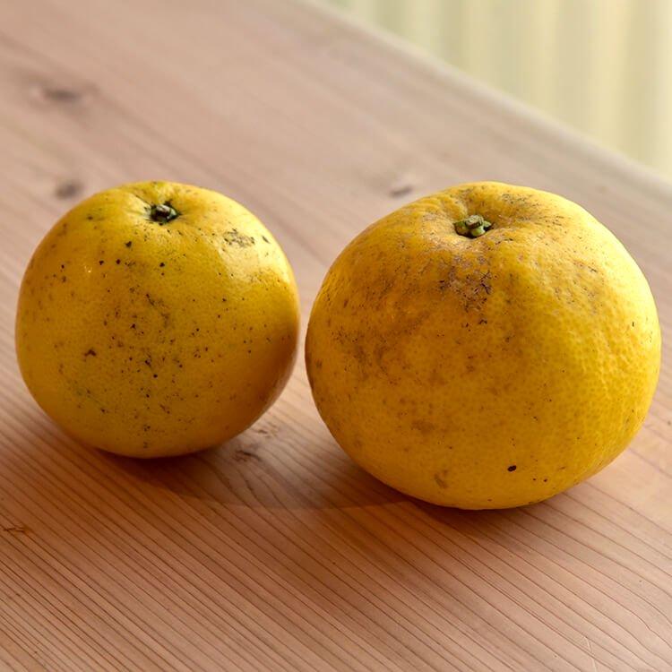 みすみサンフェルメのグレープフルーツ 2個(自然栽培)