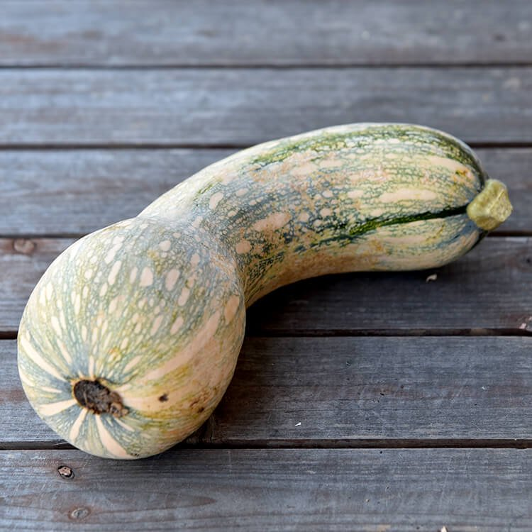 冨田さんの自然栽培かぼちゃ 1個(1.4〜1.6kg)