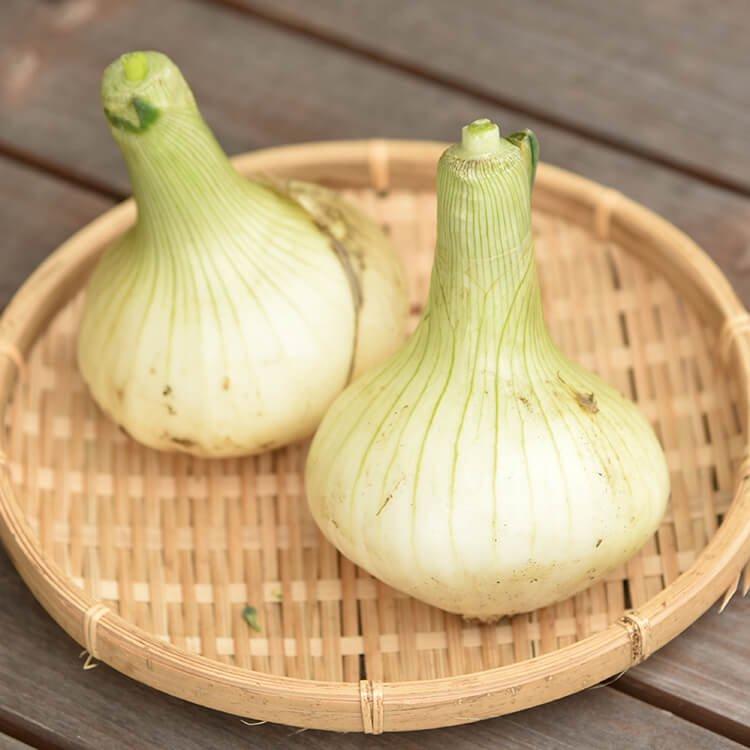 玉名UNOナチュラルの自然栽培 サラダ玉ねぎ 2〜3個 6/2(火)発送分