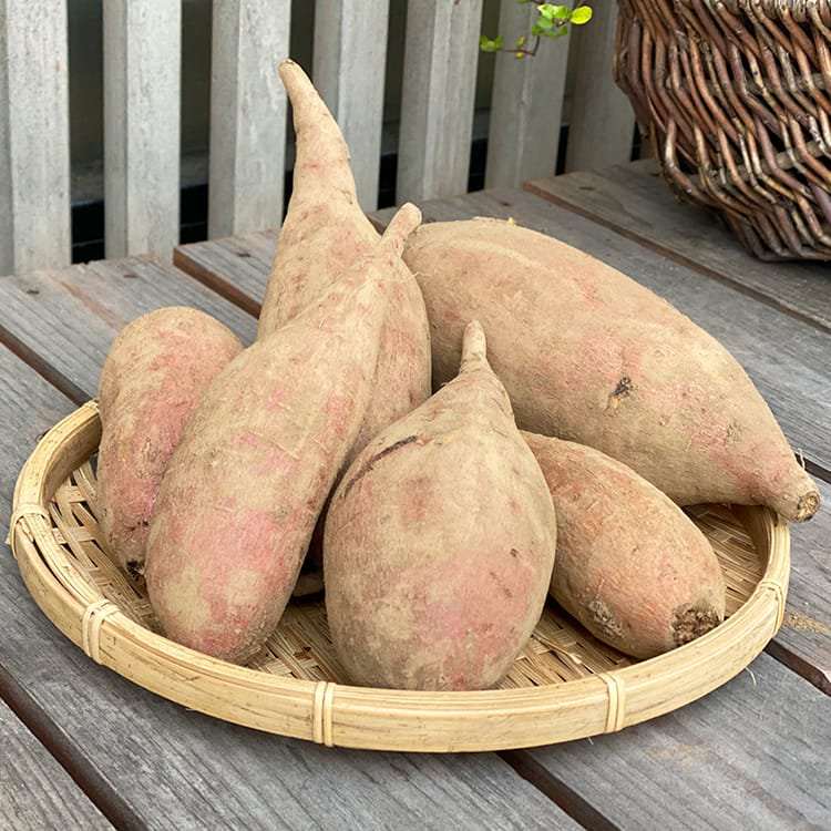 工藤さんの安納芋(土付き)1kg【農薬不使用・無化学肥料栽培】