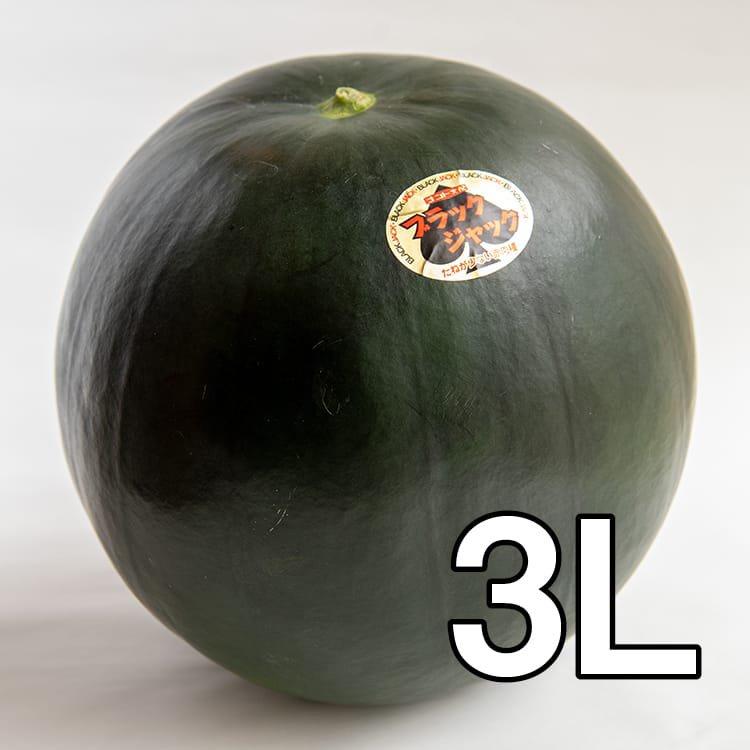 【予約販売・送料込み】うちだファームのスイカ:ブラックジャック3L玉:約8kg(減農薬:熊本県植木産)