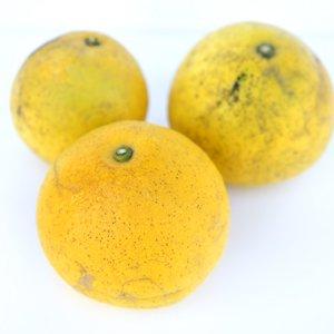 森さんのパール柑 1kg(農薬・肥料不使用栽培)