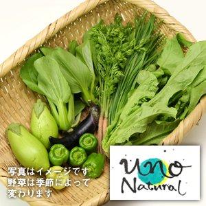 玉名UNOナチュラル 農薬不使用栽培 野菜セット【5品】10/25(金)発送分